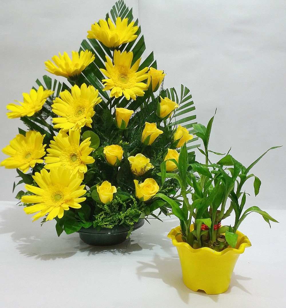 Yellow Delight Combo 10 Yellow Roses 8 Yellow Gerberas