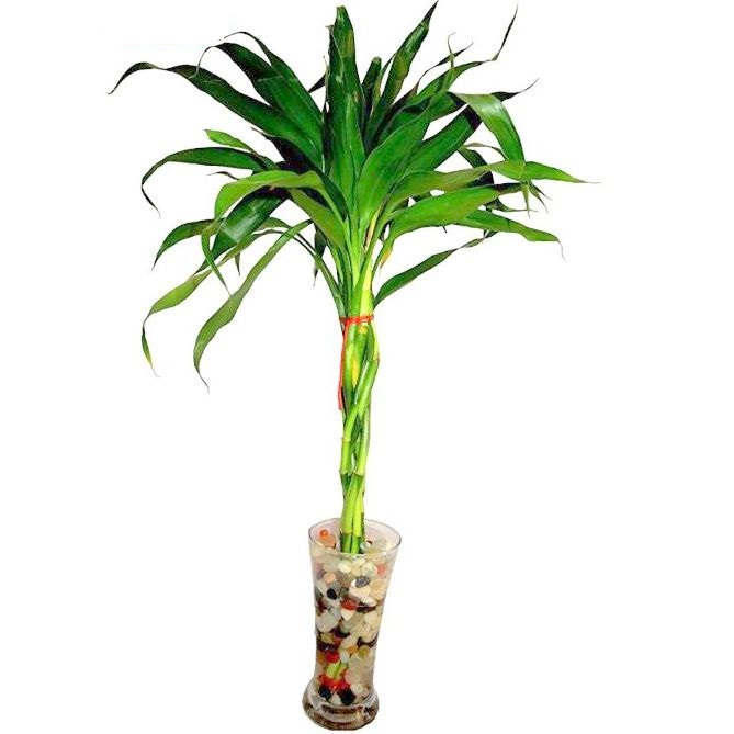 Feng Shui Good Luck Bamboo Braided Nine Arrangement Plant With Glass Vase Amp Stone